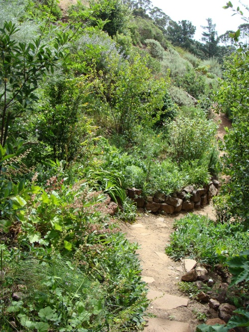 Lush hillside garden at 34 Valletta. Photo by Margo Bors.