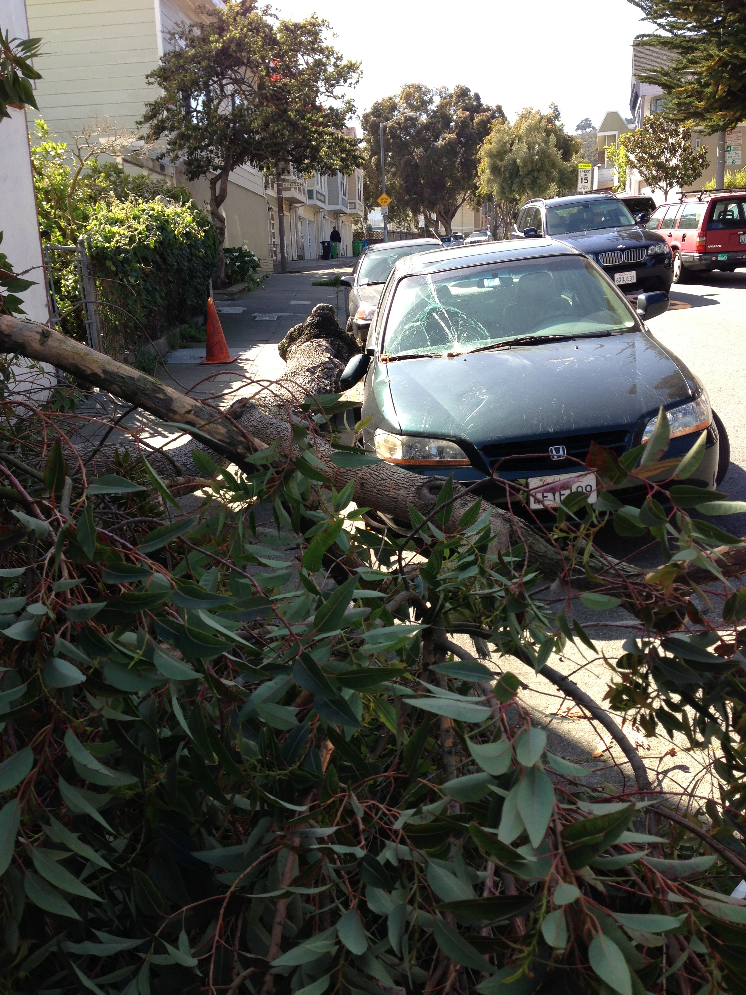 High Winds Blow Over Tree On Chenery Crush Car The Glen Park