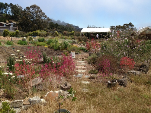 California native plant garden housed on student farm at the Academy of Arts and Sciences.
