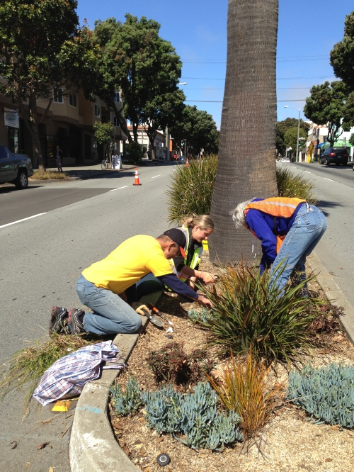 Supervisor Norman Yee, volunteers Mandy Hicks and Sally Ross pick weeds along Monterey Boulevard on July 13, 2013.