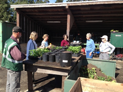 Park and Rec gardeners Randy Zebell (in green vest) and Licia De Meo (in red T-shirt) offer tutorial to Friends of Glen Canyon volunteers Kay Westerberg, Jean Conner and Mary Huizinga.  Notice large black container of back soil on the work table.