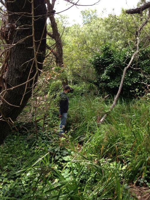 Tangled undergrowth.