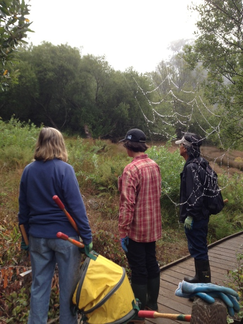 Kay Westerberg (holding mattock, lopper and pop-up bag) and Steve Uchida studying spider webs in seep adjacent to Islais Creek boardwalk.