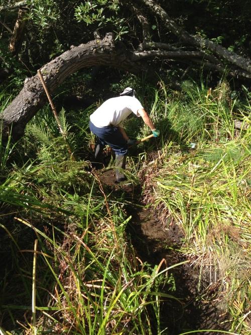 Steve Uchida clearing Islais Creek of bulrush.