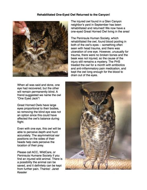 one eyed owl