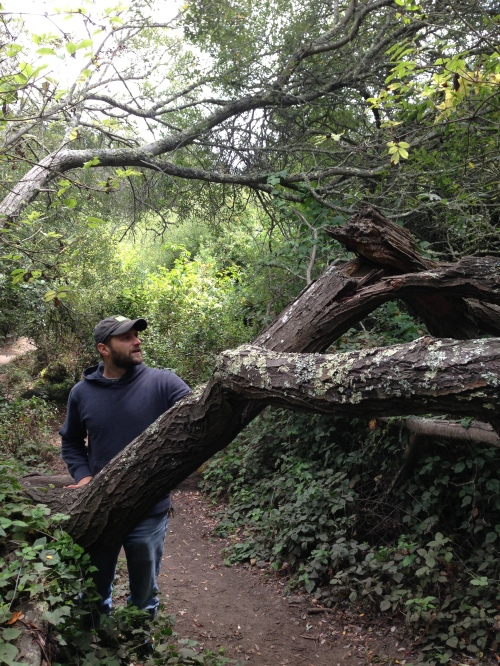 A willow that obstructs a canyon trail.
