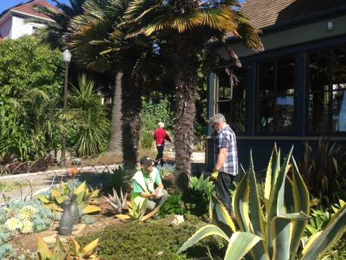 Rec and Parks gardener Jason Mueller and Friends of Sunnyside Conservatory volunteer John Priola discussing succulents.