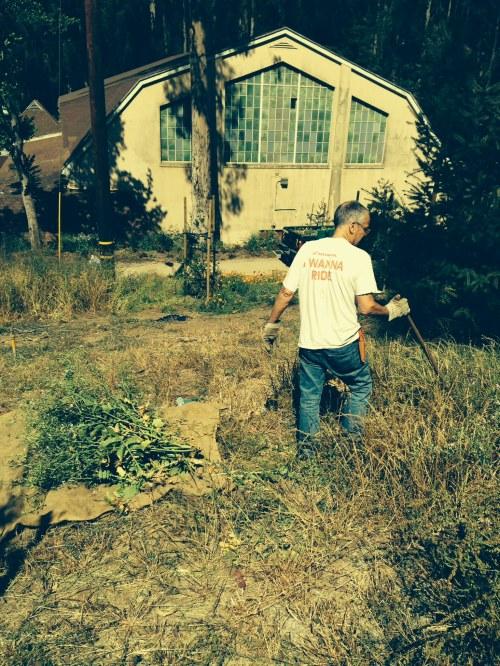 Volunteer Jay Estey uprooting mustard and radish is Glen Canyon Park on June 13.