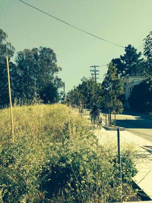 Mustard blankets the Elk Street hillside. Rec and Parks goal: remove it!