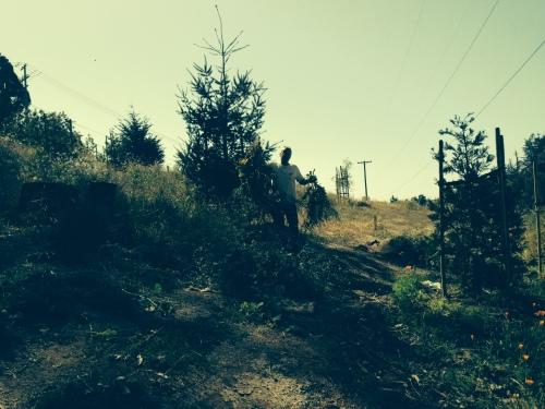 Volunteer Jay Estey collecting weeded mustard in Glen Canyon Park on June 13.