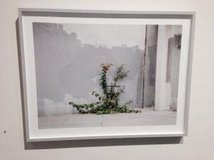 """""""Grey Wall""""  John Priola - 2014"""