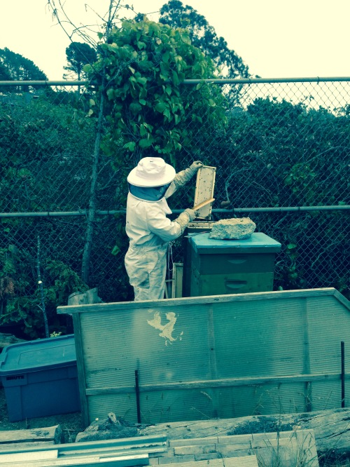 Fernando Aguilar harvesting honey from one of several frames taken from one of his two beehives. The frame is a mixture of honey and beeswax.
