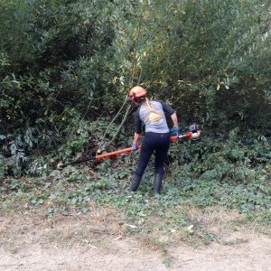 Using power saw, Rec and Park gardener, Jenny Sotelo, cutting thick willow limbs along Alms Road.