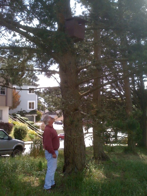 Craib barn owl box