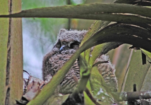 Weise-2012-04-17-2 fledgling